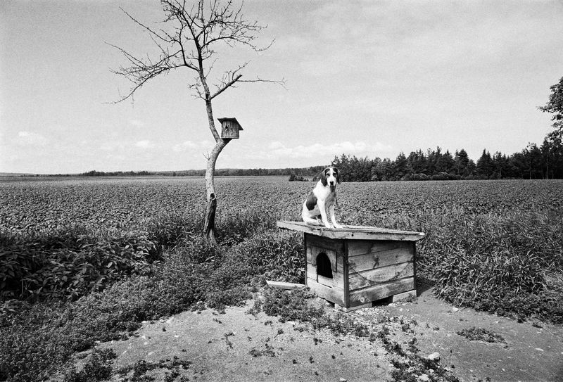 Coon dog, Maine PS copy 2
